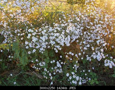 Nowcasting vegetazione 2019-dscn7333.jpg