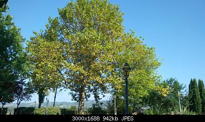 Nowcasting vegetazione 2019-img_20191001_153549.jpg