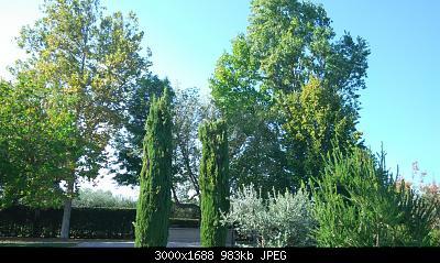 Nowcasting vegetazione 2019-img_20191001_153838.jpg