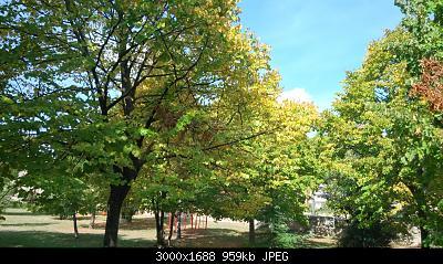 Nowcasting vegetazione 2019-img_20191014_132633.jpg