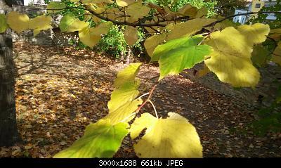 Nowcasting vegetazione 2019-img_20191014_132716.jpg