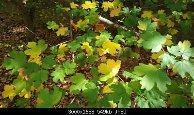 Nowcasting vegetazione 2019-img_20191014_132727.jpg