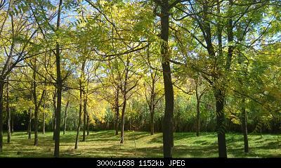 Nowcasting vegetazione 2019-img_20191015_113338.jpg