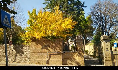 Nowcasting vegetazione 2019-img_20191023_130852.jpg