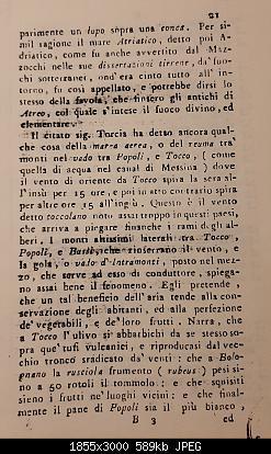 Alberi tipici delle regioni italiane-20191105_225053.jpg