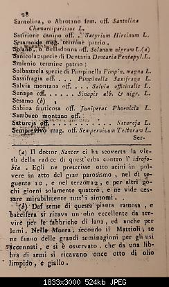 Alberi tipici delle regioni italiane-20191105_225342.jpg