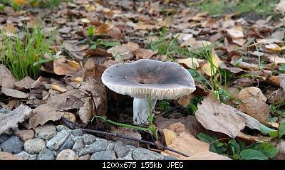 Esperti di funghi a me-1.jpg