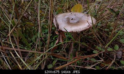 Esperti di funghi a me-3.jpg