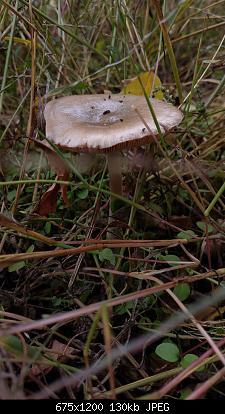 Esperti di funghi a me-4.jpg