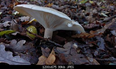 Esperti di funghi a me-5.jpg
