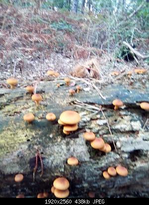 Esperti di funghi a me-img_20180915_163322-compr.jpg
