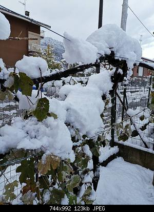 Basso Piemonte - Novembre 2019-img_20191115_081147.jpg
