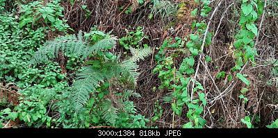 Nowcasting vegetazione 2019-20191125_144014.jpg