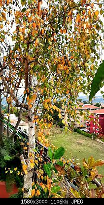 Nowcasting vegetazione 2019-20191127_142436.jpg