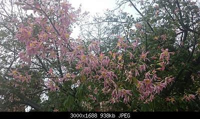 Nowcasting vegetazione 2019-img_20191114_083640.jpg