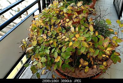 Nowcasting vegetazione 2019-20191130_144236.jpg