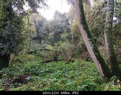 Nowcasting vegetazione 2019-4179f067-4b16-4b94-82e1-2ccfa1b8786a.jpg