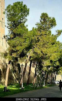 Nowcasting vegetazione 2019-20191216_123914.jpg