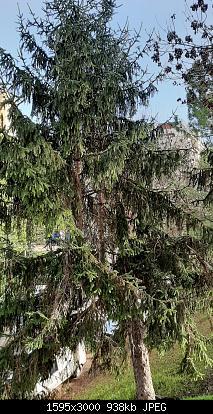 Nowcasting vegetazione 2019-20191216_123954.jpg