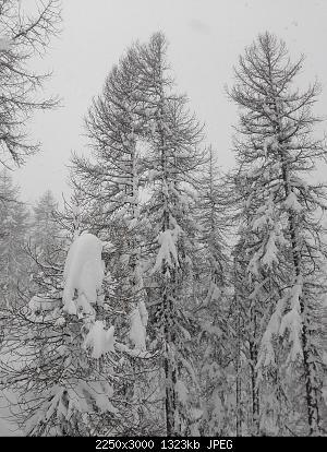 Nowcasting Torino e Provincia Dicembre 2019-img_20191222_140302.jpg