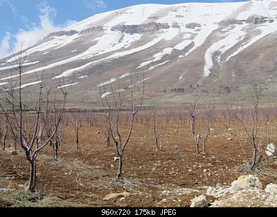 Catena del Libano - Situazione neve attraverso le stagioni-401293_10150546583879935_698689934_10577335_499031764_n-1-.jpg