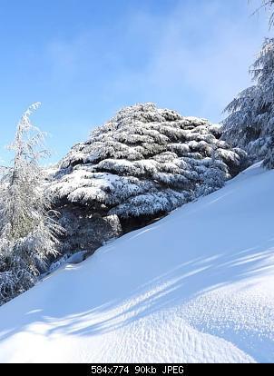 Catena del Libano - Situazione neve attraverso le stagioni-82900020_3000850399927897_5652882122151559168_n.jpg