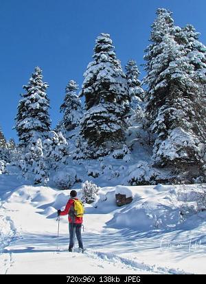 Catena del Libano - Situazione neve attraverso le stagioni-83990846_3027119470634323_3033748955528691712_o.jpg