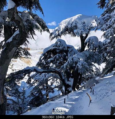 Catena del Libano - Situazione neve attraverso le stagioni-83894044_3025080684171535_6344527712580796416_n.jpg