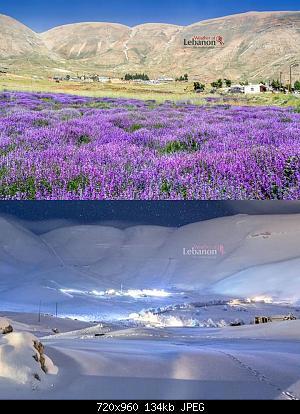Catena del Libano - Situazione neve attraverso le stagioni-86719173_3020211167991065_1029337789214228480_o.jpg