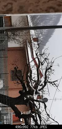 Basso Piemonte - Marzo 2020-img-20200327-wa0026.jpg