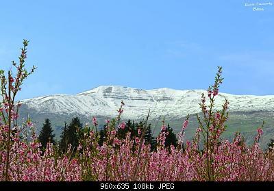Catena del Libano - Situazione neve attraverso le stagioni-91025616_3140875619258707_8148509999484633088_o.jpg