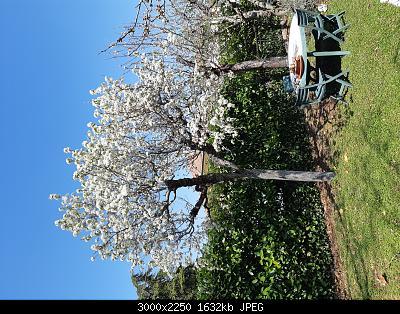 Nowcasting Nazionale Aprile 2020-20200404_122820.jpg