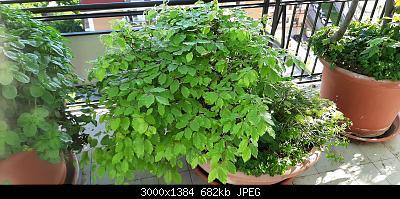 Nowcasting Vegetazione 2020-20200429_084213.jpg