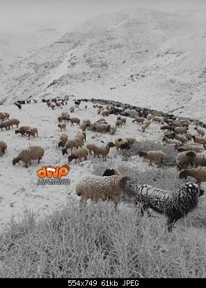 Catena del Libano - Situazione neve attraverso le stagioni-100530140_2516338188466402_3467460624299065344_n.jpg