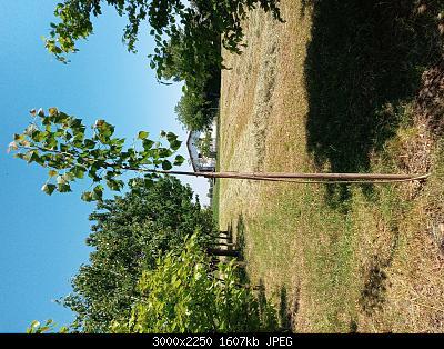 Nowcasting Vegetazione 2020-20200507_134346.jpg