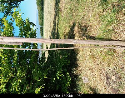 Nowcasting Vegetazione 2020-20200507_134356.jpg