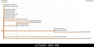 Nuovo Virus Cinese-screenshot_2020-05-29-nextstrain-ncov-global-2-.png