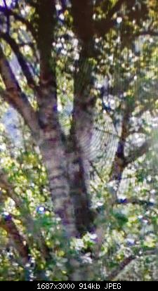 Vallate alpine senza faggi-20200706_172012.jpg