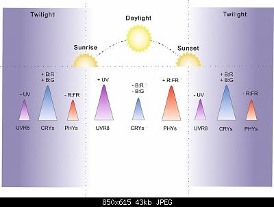 Arriva l'estate: confronto schermi solare-schematic-highlighting-diurnal-changes-in-spectral-composition-and-the-photoreceptors.jpg