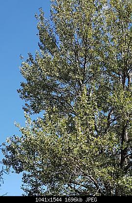Vallate alpine senza faggi-20200713_115452.jpg