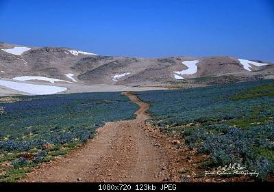 Catena del Libano - Situazione neve attraverso le stagioni-108120599_3423918497621083_5867991960353601724_o.jpg