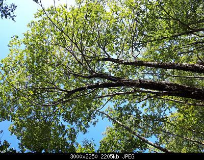 Nowcasting Vegetazione 2020-20201010_133622.jpg