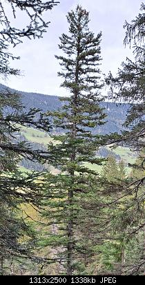 Vallate alpine senza faggi-20201018_022513.jpg