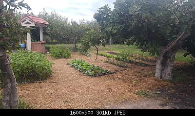 Nowcasting Vegetazione 2020-whatsapp-image-2020-10-30-at-6.06.24-pm.jpeg