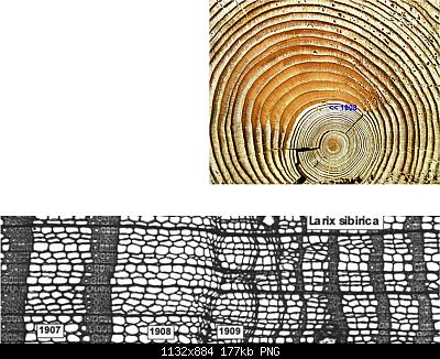 Tunguska: il mistero continua-picture-5.jpg