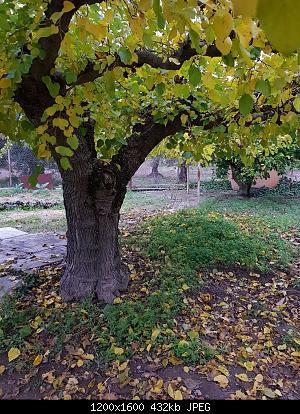 Nowcasting Vegetazione 2020-whatsapp-image-2020-11-24-at-4.30.32-pm.jpeg