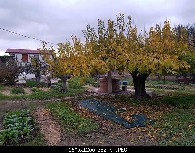 Nowcasting Vegetazione 2020-whatsapp-image-2020-11-24-at-5.24.06-pm.jpeg