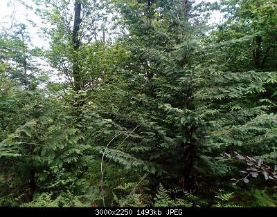 Nowcasting Vegetazione 2020-img_20200523_142105.jpg