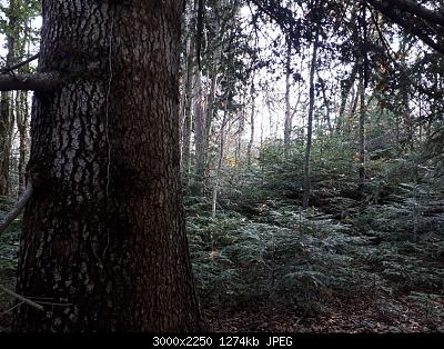 Nowcasting Vegetazione 2020-20201128_121246.jpg
