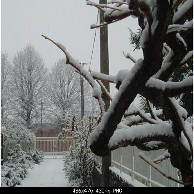 didattica meteo da una nevicata-figura1-1-486x470.png
